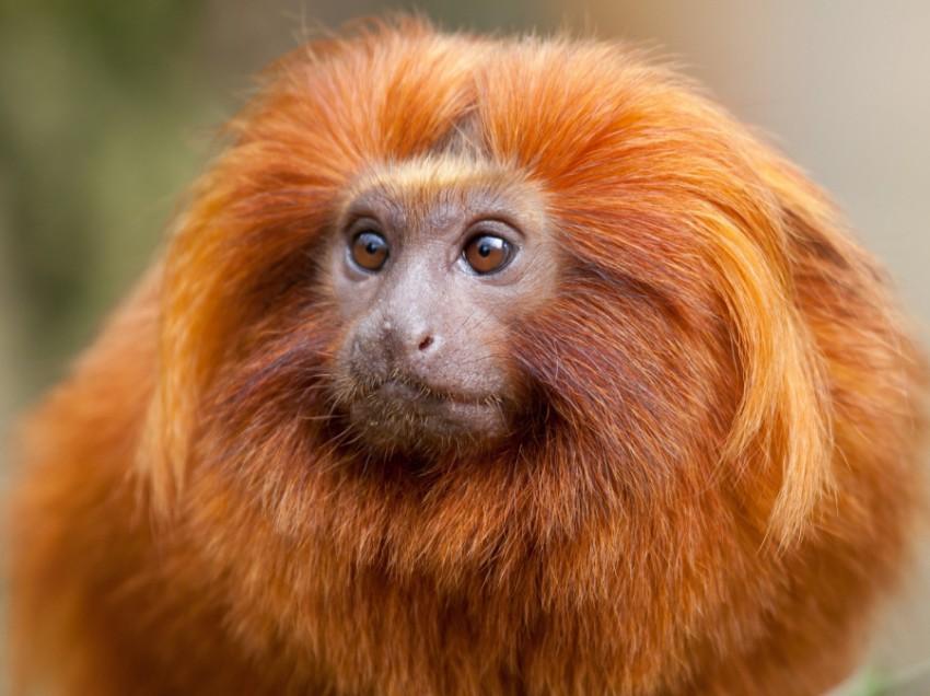 Под знаком какого животного будет 2016 год?
