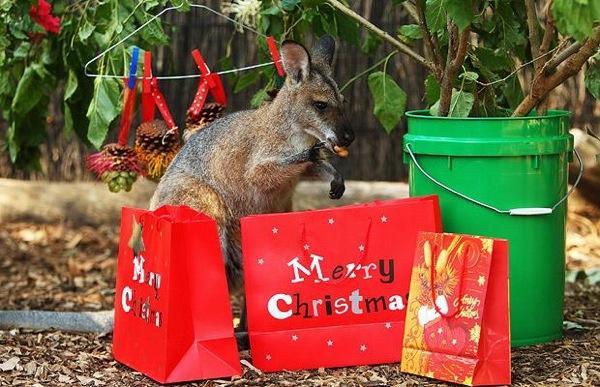 Новогодние и рождественские традиции Австралии3