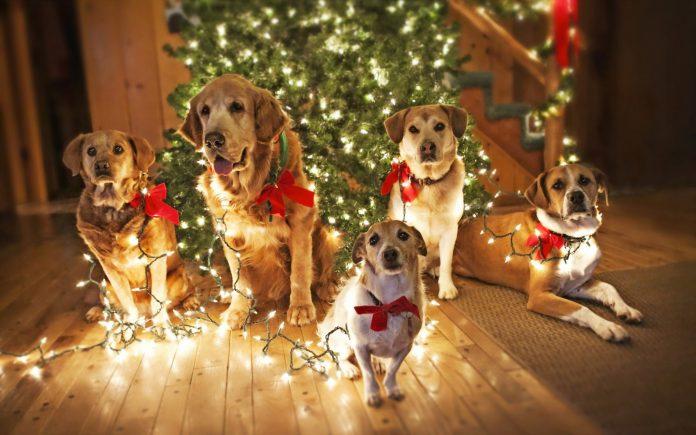 Ключевые моменты подготовки к году Желтой Земляной Собаки2