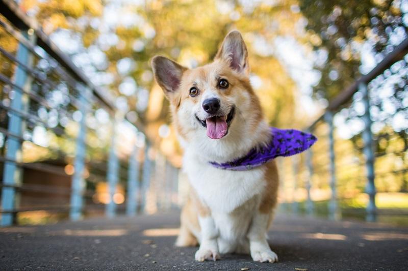 Подарить собаку в год Собаки «за» и «против». Часть 1.1