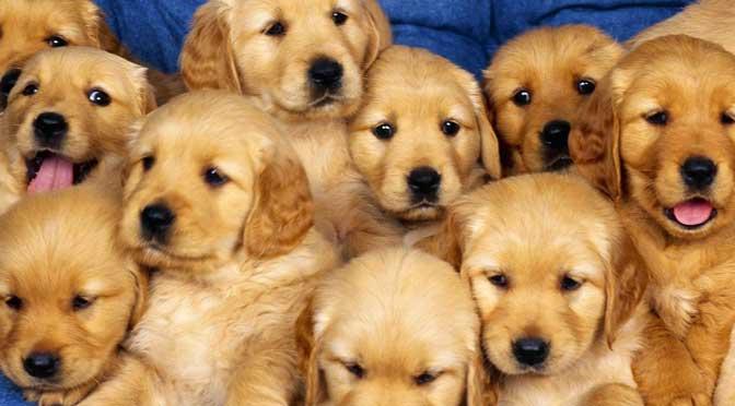 Подарить собаку в год Собаки: «за» и «против». Часть 1.