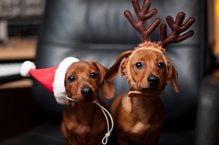 Подарить собаку в год Собаки «за» и «против». Часть 1.3