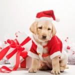 Подарить собаку в год Собаки: «за» и «против». Часть 2.