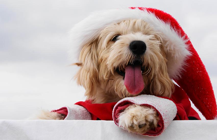 Все об астрологическом символе 2018 года – Желтой Земляной Собаке. Часть 2.
