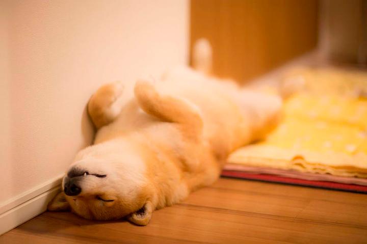 Все об астрологическом символе 2018 года – Желтой Земляной Собаке. Часть 2.2