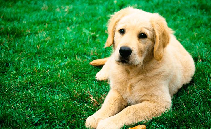 Все об астрологическом символе 2018 года – Желтой Земляной Собаке. Часть 2.3