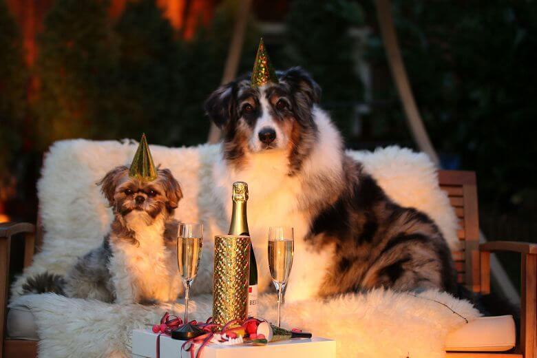 Все об астрологическом символе 2018 года – Желтой Земляной Собаке. Часть 2.4