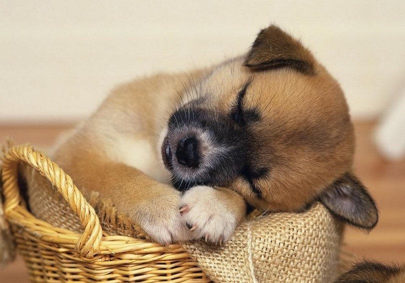 Все об астрологическом символе 2018 года – Желтой Земляной Собаке. Часть 2.5