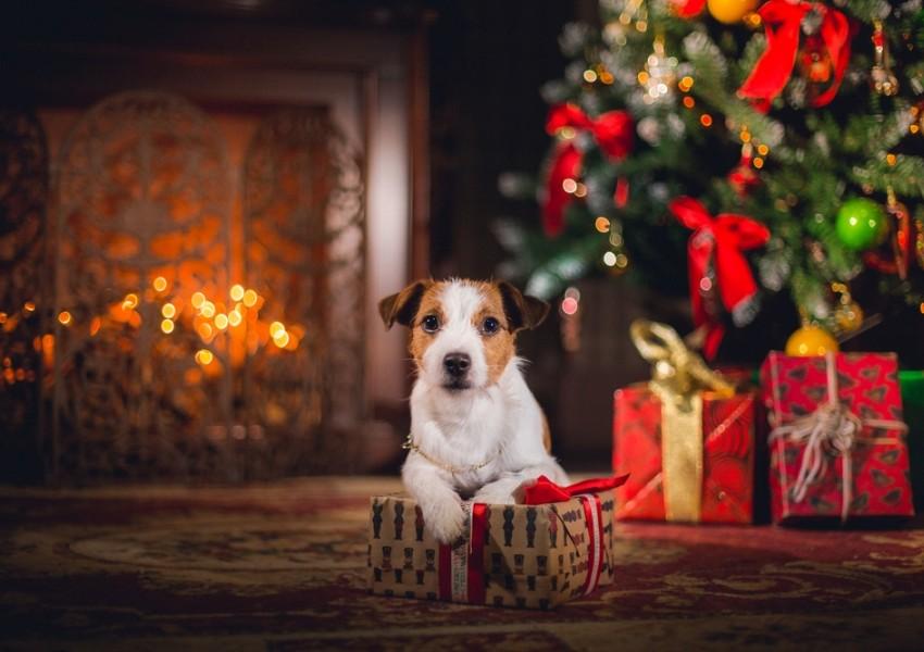 Новый год 2018 – в каждый дом!