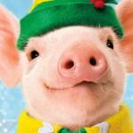 Встречаем Новый 2019 год правильно, или как понравиться Жёлтой Свинье.