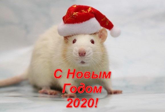 Новый 2020-тый — год Крысы